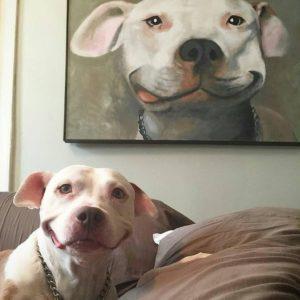 importaliza momente din viata animalutelor de companie intr un tablou canvas